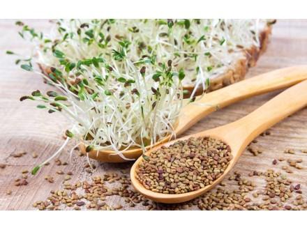 Alfalfa (Lucerka), 2g (oko 1000 semenki)