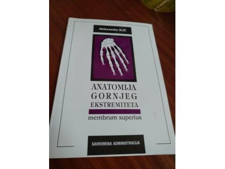 Anatomija gornjeg ekstremiteta Aleksandar Ilić