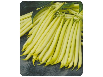 Boranija `Orinoco`, žuta olovka, 50 semenki