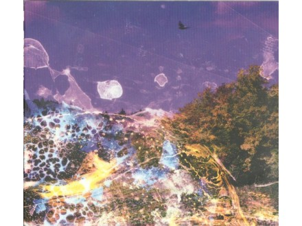 Haiku Garden – Where If Not Now
