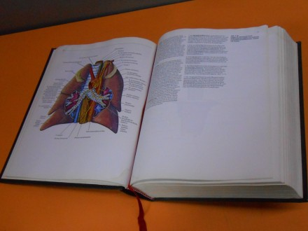 Klinische Anatomie. Atlas und Textbuch Klaus Ulrich
