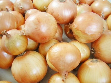 Luk Kupusinski jabučar, 1g (250-300 semenki