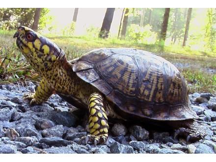Miks biljaka za ishranu kornjača, 0,5g (~ 450 semenki)