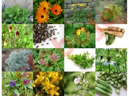 Mix lekovitih biljaka, 15 vrsta, preko 10 000 semenki