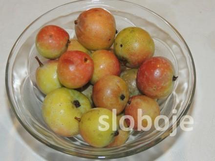 Oskoruša (Sorbus domestica), 5 semenki
