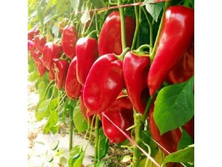 Paprika ajvaruša `Moravska kapija`, 0,5g (70 semenki)