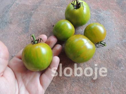 Paradajz `Abrakazebra`, 0,1g (oko 40 semenki +/-)