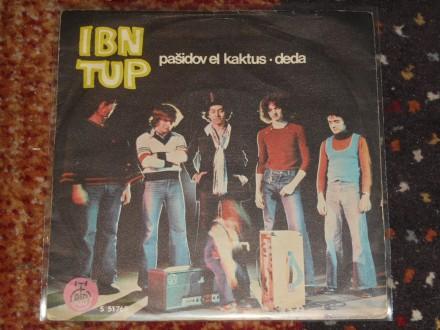 ibn tup - pašidov el kaktus/deda 5+/5