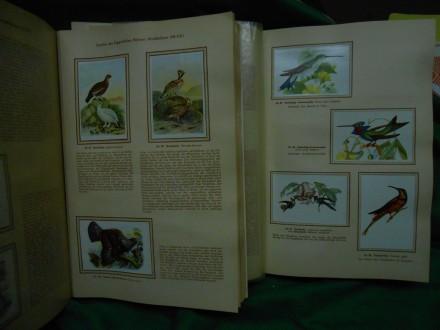 ptice- Šarene ptice iz cijelog svijeta: Kosmos Zigarett