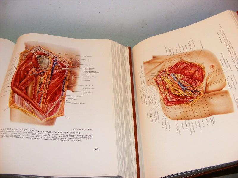 ◄Hirurška anatomija gornjih i donjih ekstremiteta 1-2►