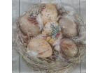 S122--  Salveta,uskršnja jaja/komad