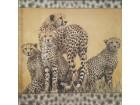 *S141--Salveta,leopard/kom