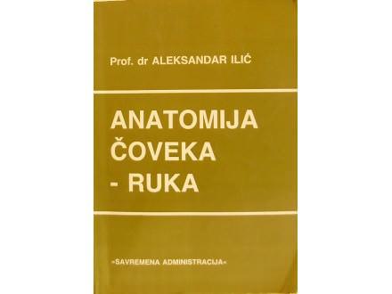 ANATOMIJA COVEKA - RUKA