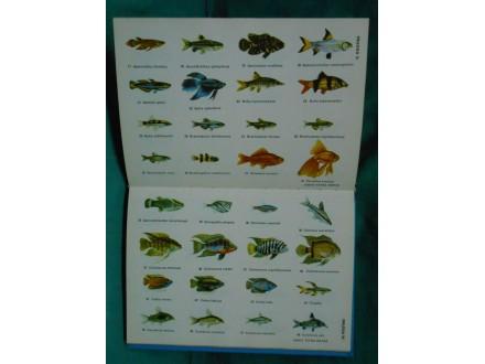 AVARIJUMSKE RIBICE-Svet akvaristike-Rihard Jerić