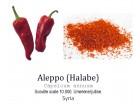 Aleppo (Halabe) chili pepper - 15 semenki