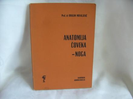 Anatomija čoveka noga Dragan Mrvaljević