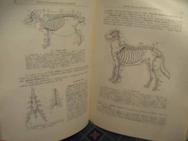 Anatomija domaćih životinja, I deo, Klimov