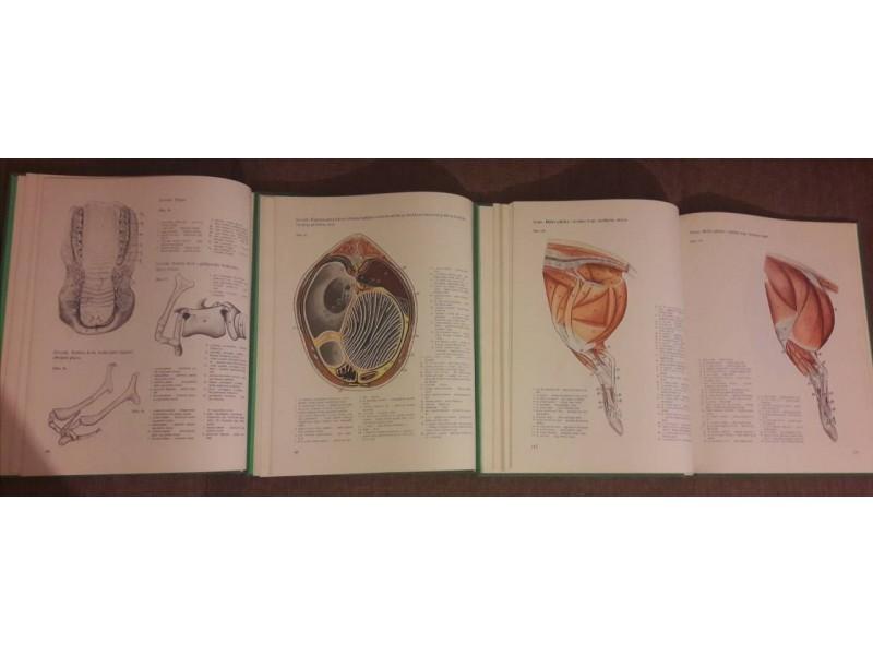 Anatomski atlas domaćih životinja Peter Popesko I-III