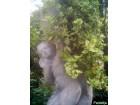 Aptenia cordifolia - ledeno cvece