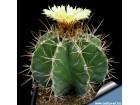 Astrophytum mix / 10 semenki