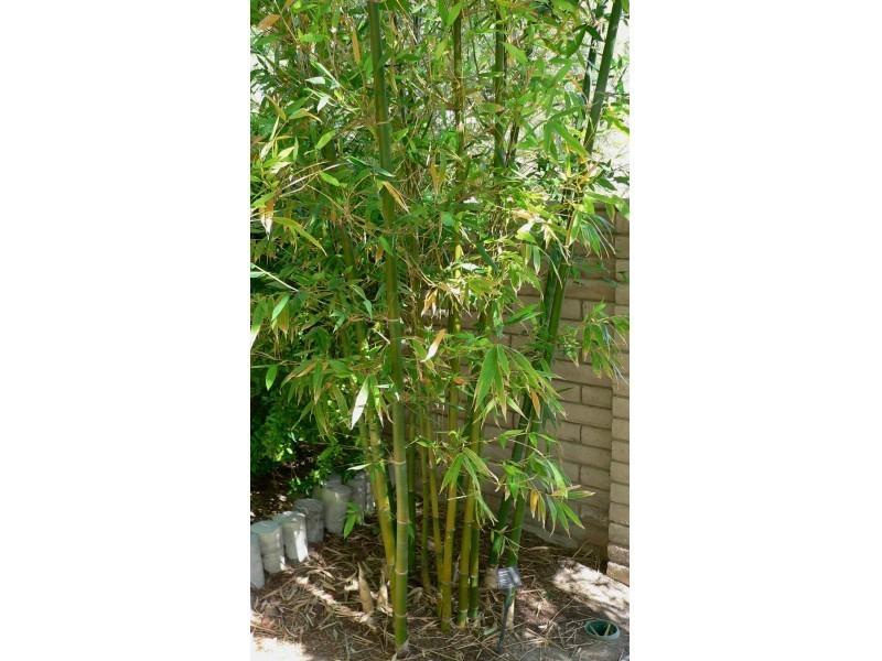 Web stranica za upoznavanje od bambusa