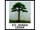 BONSAI CEDAR (KEDAR) - vrhunsko seme!