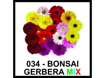 BONSAI GERBER - vrhunsko seme - MIX BOJA!