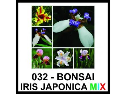 BONSAI IRIS - vrhunsko seme - MIX BOJA!