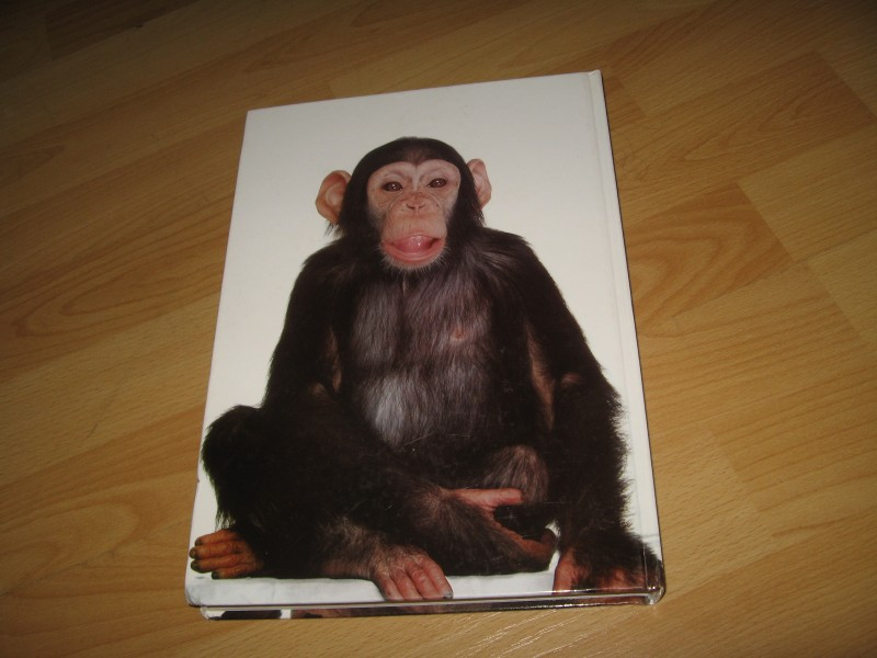 Beogradske šimpanze - Zoran Rajić