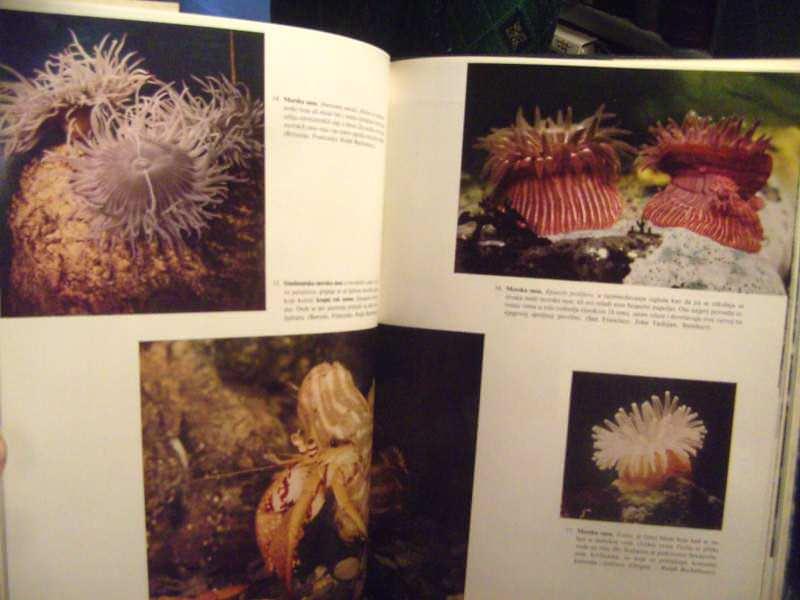 Beskičmenjaci, ilustrovana enciklopedija životinjskog