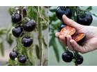 Crni paradajz - 20 semena