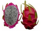Dragon fruit- zmajevo voće (15 semenki)