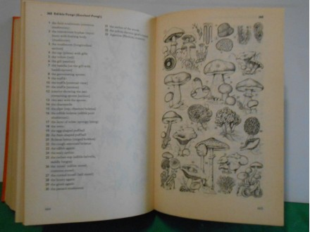 ENGLISH DUDEN, APictorial Dictionary With English Germa
