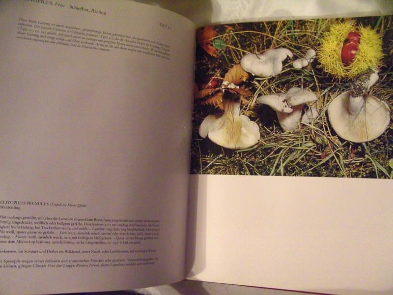 Enciklopedija pečuraka, na nemačkom, Die Pilze