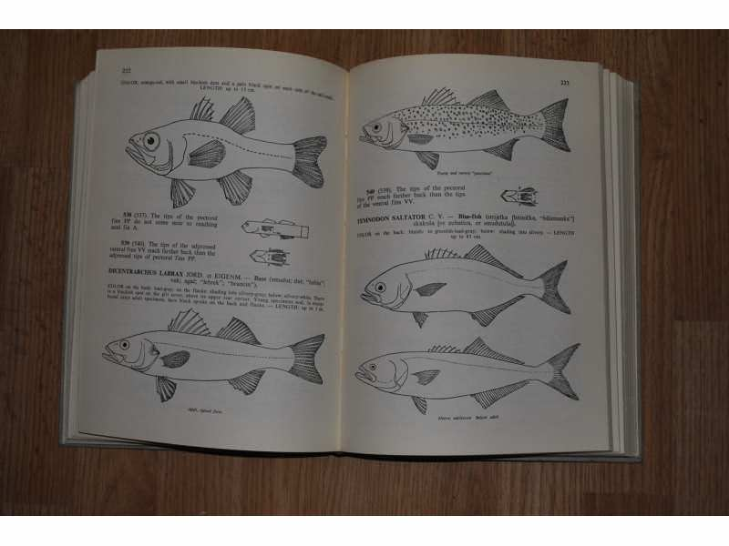 FISHES OF THE ADRIATIC