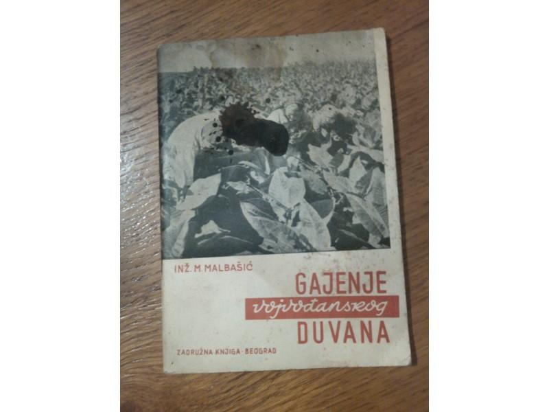 Gajenje vojvodjanskog duvana - Inz. M.Malbasic