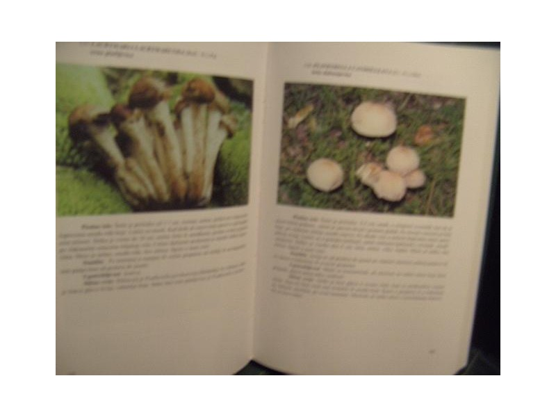 Gljive, Mirjana Davidovic novo