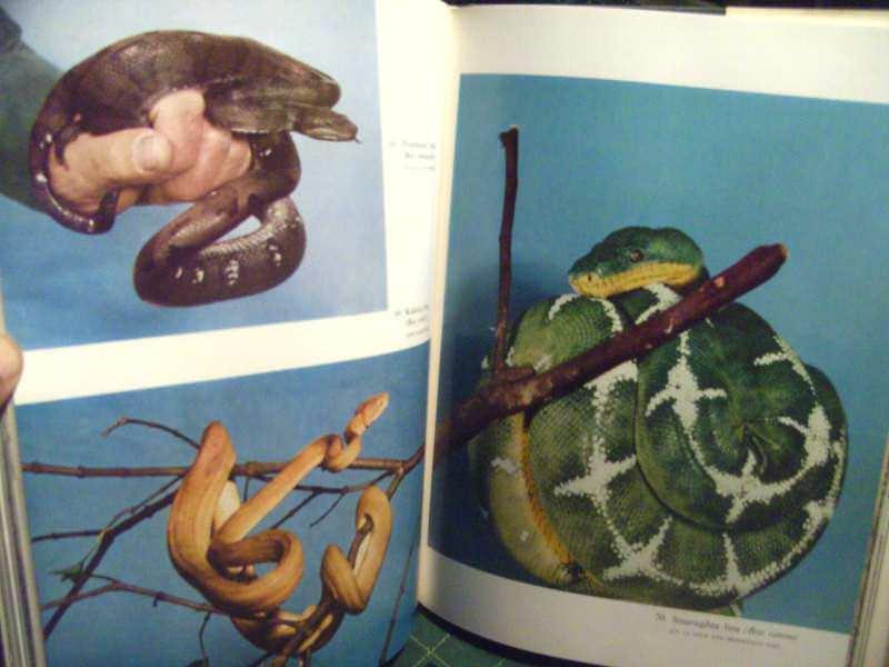 Gmizavci, ilustrovana enciklopedija životinjskog