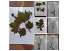 Herbarijum 10 biljaka