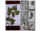 Herbarijum 20 biljaka