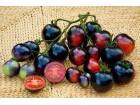 Indigo paradajz prirodno seme (15 semenki)