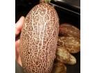 Indijski mrežasti krastavac (prirodno seme) 30 semenki