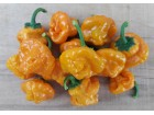 Jamaican Hot Yellow - Chili pepper 20 semenki