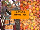 Japanska jabuka kaki sadnica (Diospyros kaki)