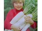 Japanska velika rotkva (hibridna) 50 semenki