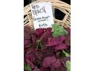 Jestiva loboda-Atriplex hortensis (150 semenki)