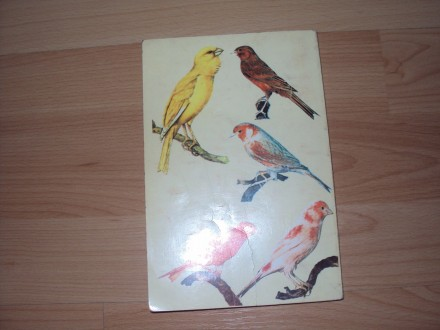 Kanarinc, sumske pevacice i papagaji