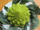 Karfiol, Romanesco brokoli, 50 semenki