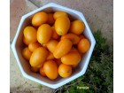 Kumkvat - zlatna narandza