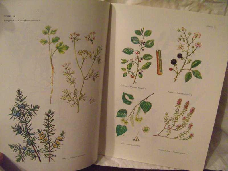 Lečenje lekovitim biljem u narodnoj medicini, Ratomir